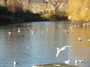 'Our Winter trip to the Duck Pond!'