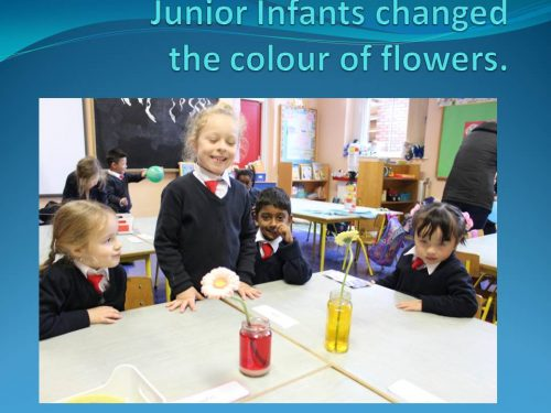 Junior Infants changed 7 A